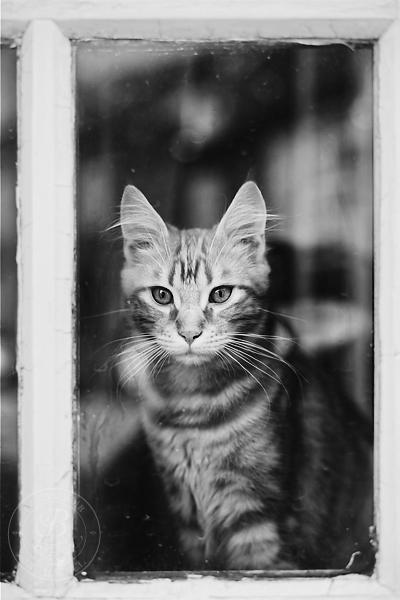 chat roux en noir et blanc